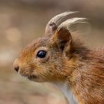 Red Squirrel 1-2-1 Workshop