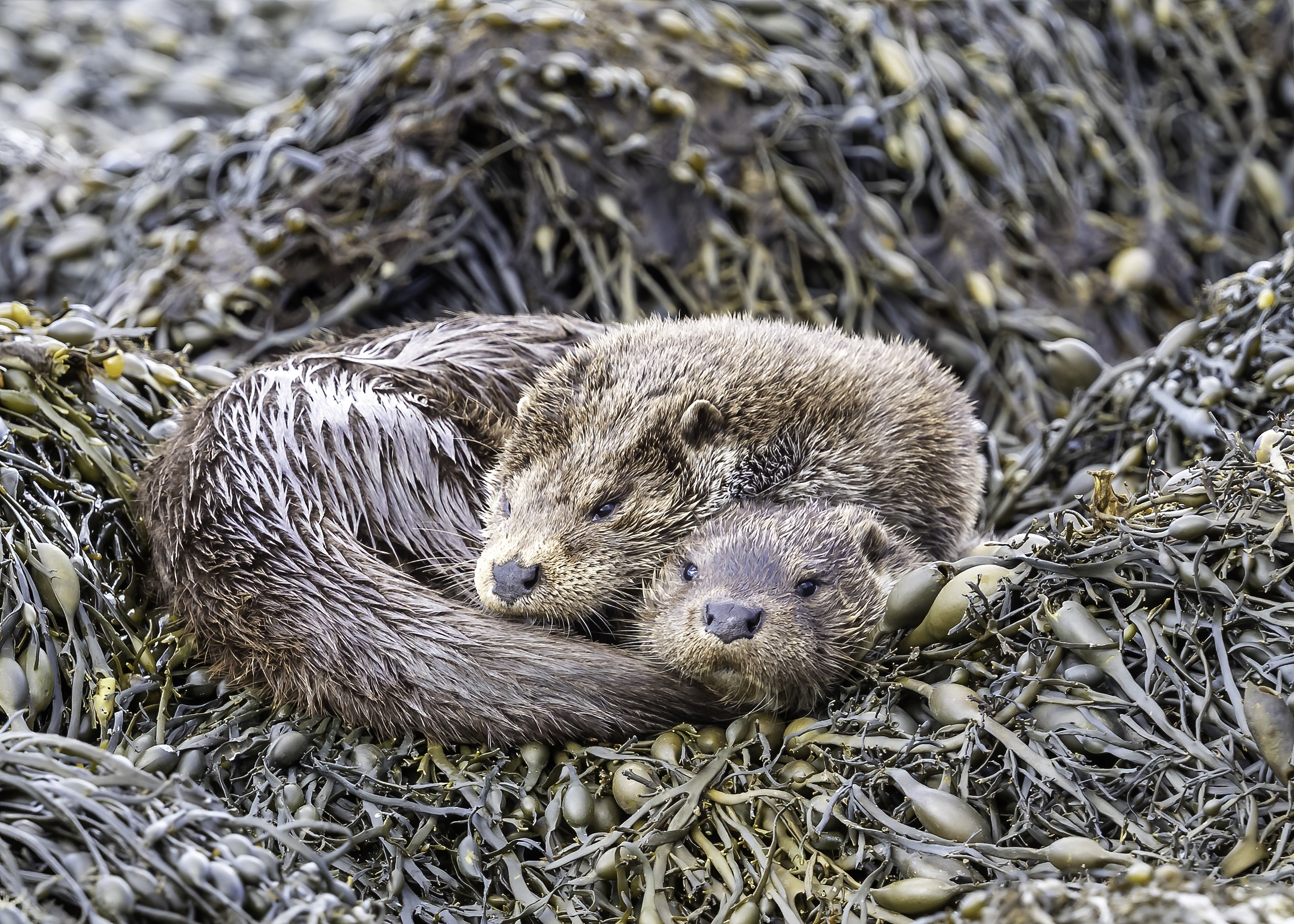 2 Otters heads together
