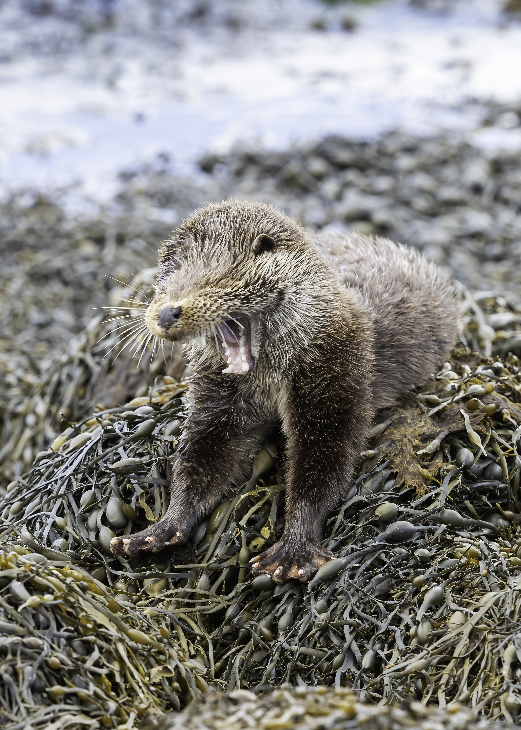 Otter Cub stretching