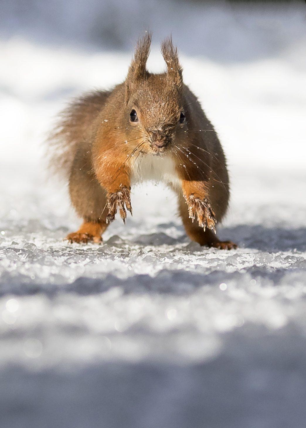 Run Squirrel Run