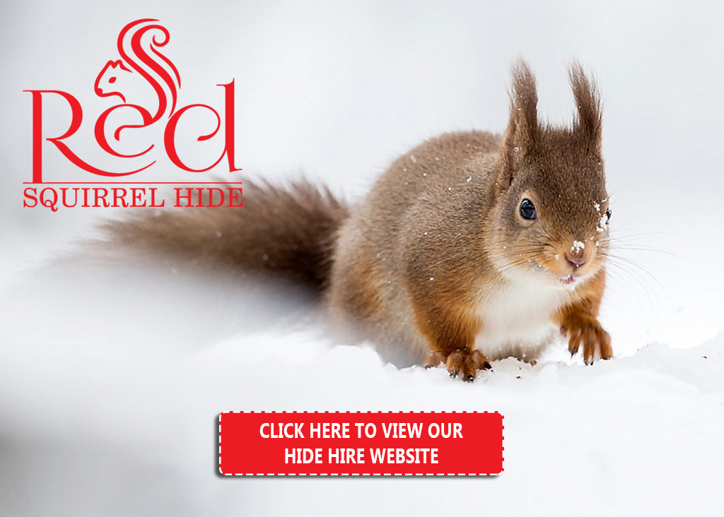 Red Squirrel Hide Hire